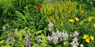 flower garden with various types and colors of flowers