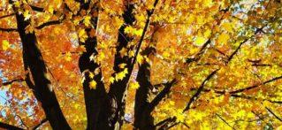 autumn foliage on tree